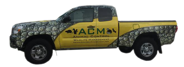 ACM offers Animal and Pest Removal Services throughout the United States