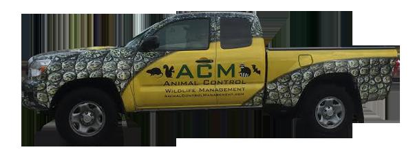 Florida wildlife animal removal service