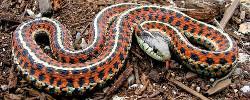 Snake removal company